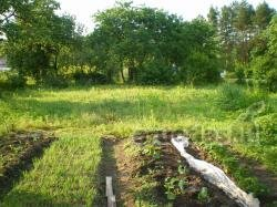 8.1 a plot is sold in a beautiful place.