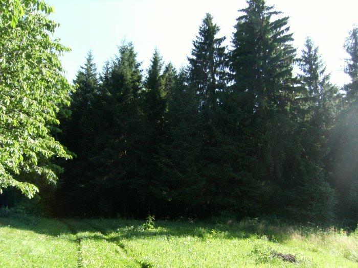 Sale Medsėdžių rural homestead