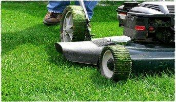 services de fertilisation de la pelouse et le découpage