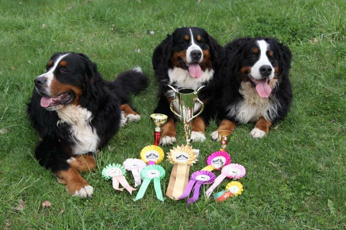 Šunų dresūros mokykla