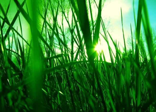 Žolės-vejos pjovimas