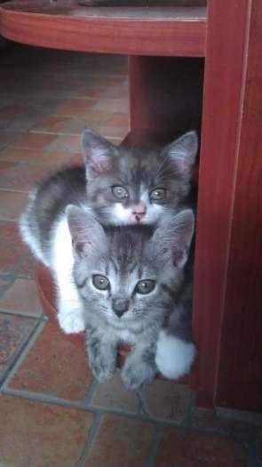 2men. Katyte ir Kaciukas iesko namuku