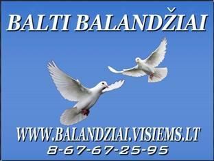 BALTI BALANDZIAI VESTUVEMS, KRIKSTYNOMS, IVAIRIOMS PROGOMS
