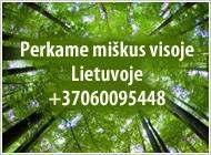 Brangiai perkame brandų mišką visoje Lietuvoje