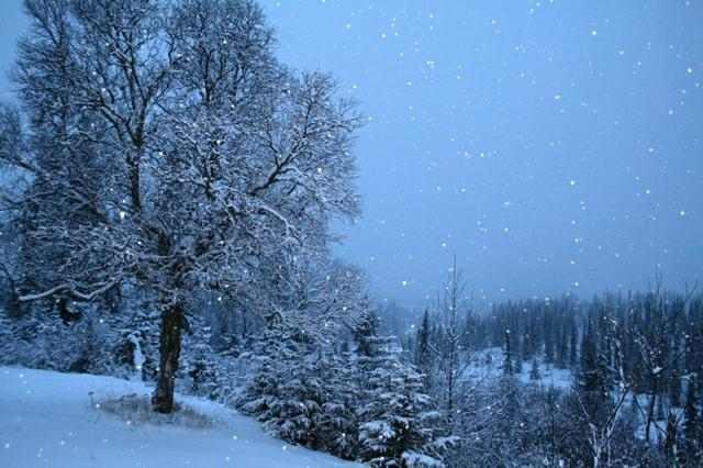 Brangiai perkame miškus 8-676-41155 VISOJE Lietuvoje su žeme arba išsikirtimui (mokame iki 35000 už