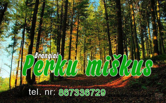 Brangiai perku miškus