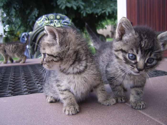 Dovanojam kačiukus