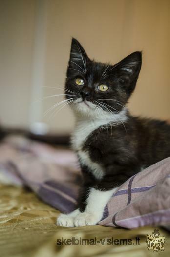 Dovanojama 2 mėn. labai draugiška katytė Čioka!