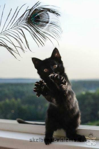 Dovanojama 3 mėn. fantastiška katytė Maja!