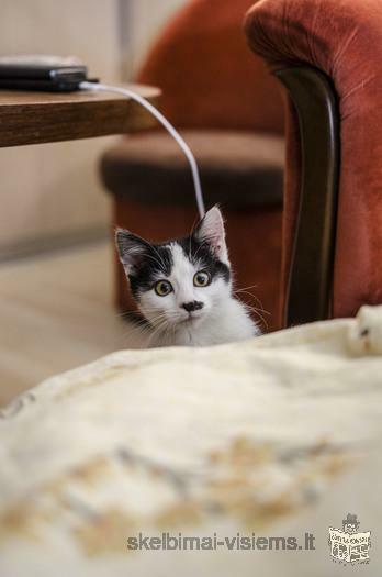 Dovanojama 3 mėn. katytė Kliaksa!
