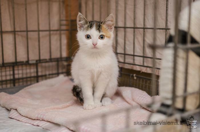 Dovanojama 3 mėn. labai meili katytė Ketė!