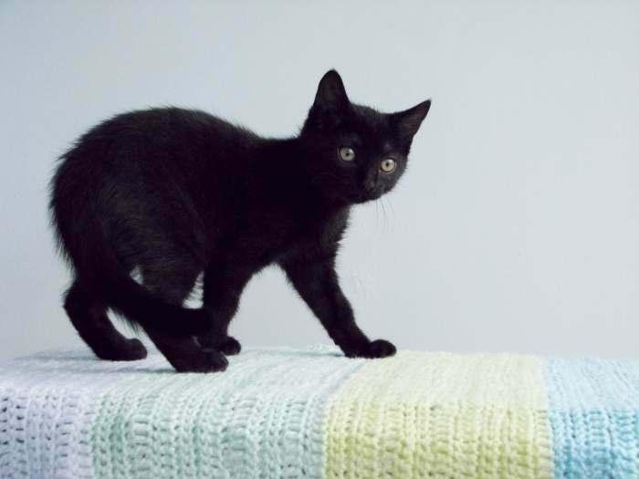Dovanojama 3 mėnesių juoda kaip anglis, greita kaip pantera katytė!