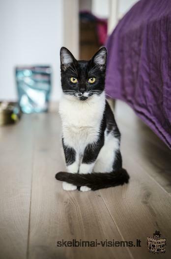 Dovanojama 4,5 mėn. katytė Margo!