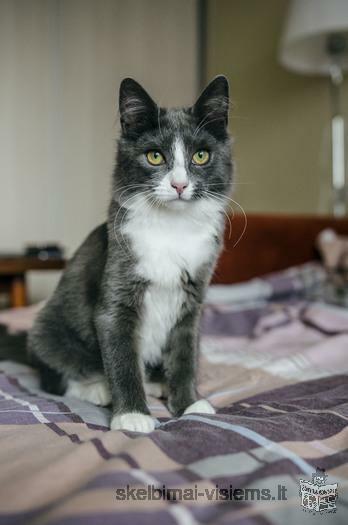 Dovanojama 6 mėn. nuostabi, sterilizuota katytė!