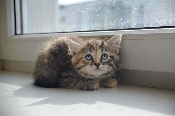 Dovanojama dieviško grožio maža katytė Rio!