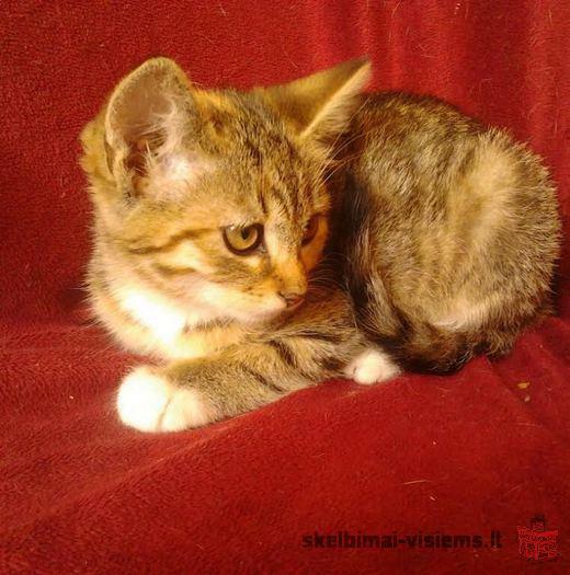 Dovanojama gražuolė katytė