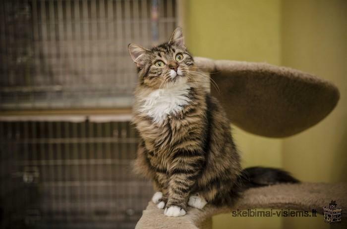 Dovanojama karališko grožio katytė Dionė!