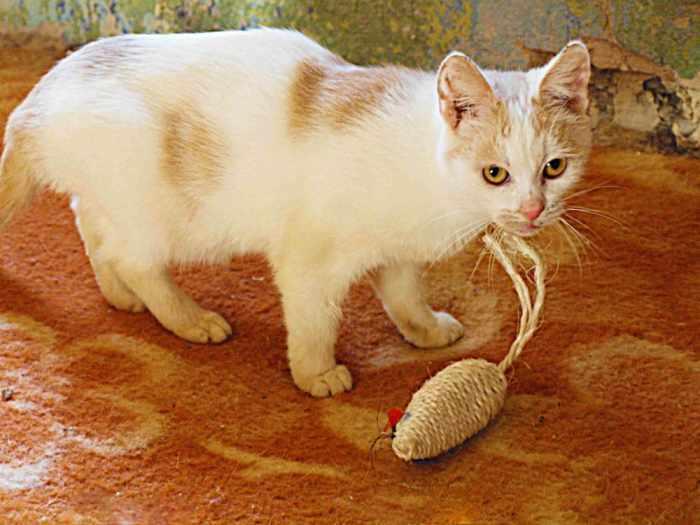 Dovanojama katytė