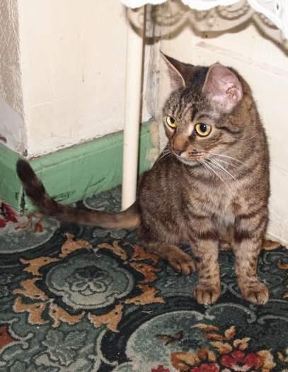 Dovanojama katytė Lina