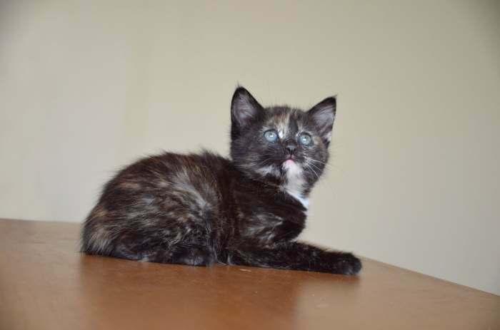 Dovanojama maža katytė- spalvota kaip margutis!