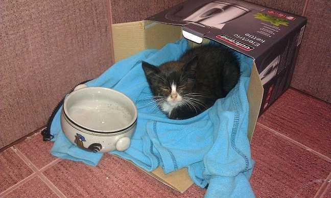 Dovanojama maža skiepyta katytė :)