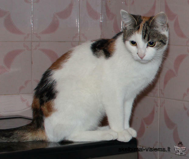 Dovanojama meili katytė Piksė