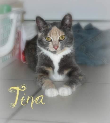 Dovanojama nuostabaus grožio katytė Tina