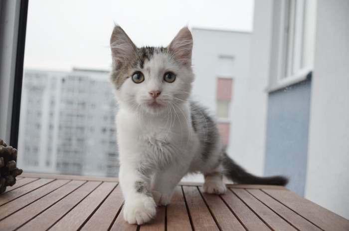 Dovanojama nuostabi, pūkuota katytė Gegužė!