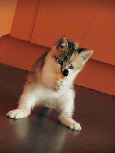 Dovanojama puiki 2 mėn. mažylė rasta prie banko, vardu Blanka!