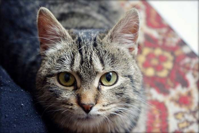 Dovanojama raina katytė