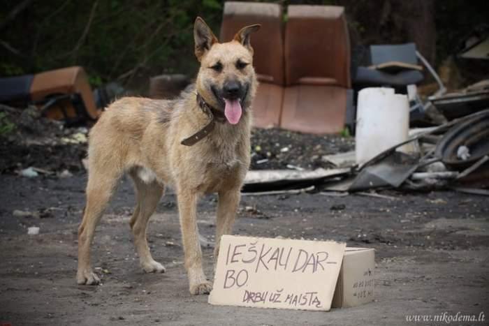 Dovanojamas šunelis Geruolis