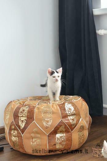 Dovanojamas 2,5 mėn. žavus katinėlis Dynas!