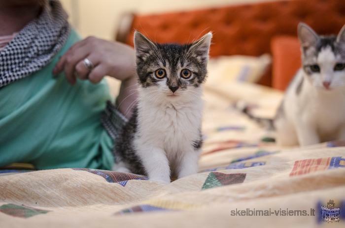 Dovanojamas 2mėn. mielas kačiukas Pripsas!