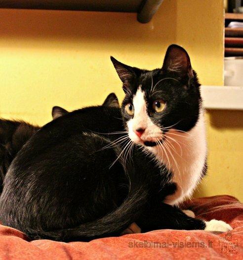 Dovanojamas draugiškas ir protingas jaunas katinėlis