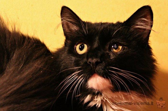 Dovanojamas jaunas linksmas puikaus charakterio katinas
