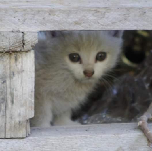 Dovanojamas kačiukas-ė