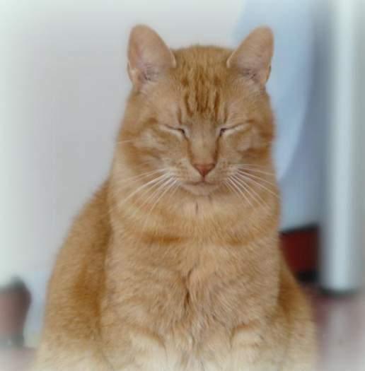 Dovanojamas katinukas