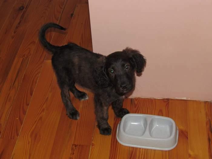 Dovanojamas labai gražus 3 mėnesių šuniukas!