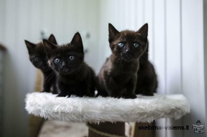 Dovanojami 1,5 mėn. švelniausia kačiukų mafija!