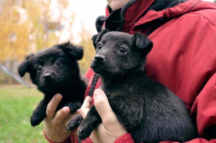 Dovanojami 1,5 mėn. sveiki šuniukai su ypatinga istorija!