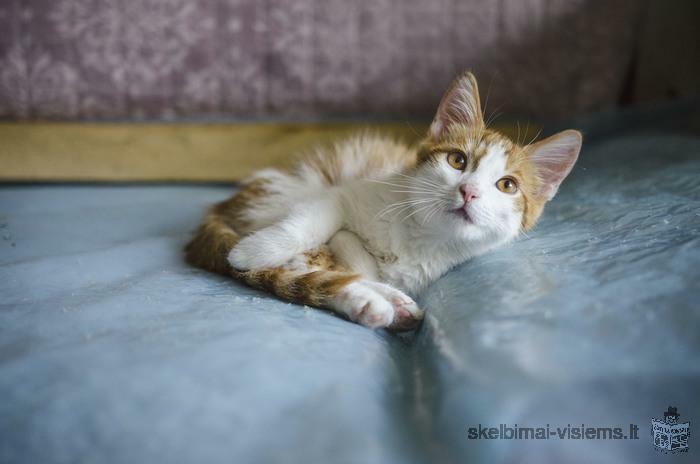 Dovanojami 3,5 mėn. draugiški kačiukai!