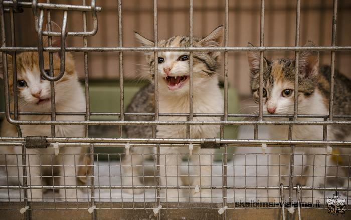 Dovanojami 3 mėn. draugiški, spalvoti kačiukai!