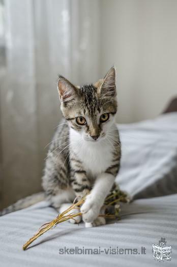Dovanojami 3 mėn. nerealioji katytė Java!