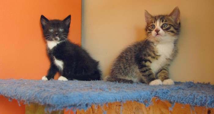 Dovanojami du ypatingi kačiukai!