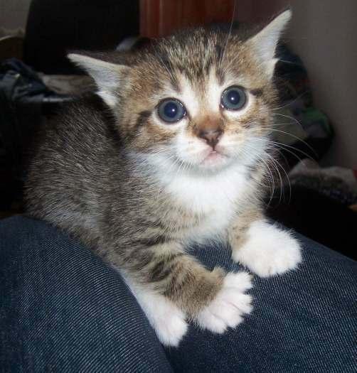 Dovanojami kačiukai