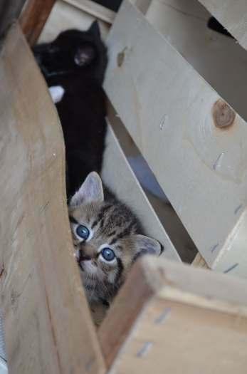 Dovanojami maži kačiukai- pipiriukai!