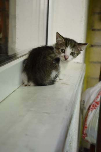 Dovanojami nuostabūs kačiukai, gimę balkone!