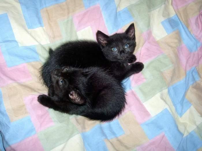 Dovanojamos katytės Kava ir Arbata