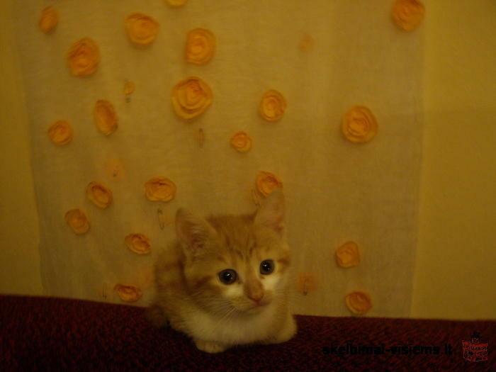 Dovanoju kačiukus
