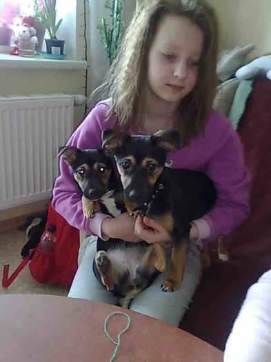 Du šuniukai ieško namų!